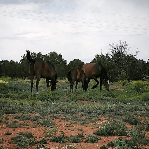 Three horses, all chestnut. One is a tiny baby foal with a lil bottlebrush tail. They are SO CUTE.