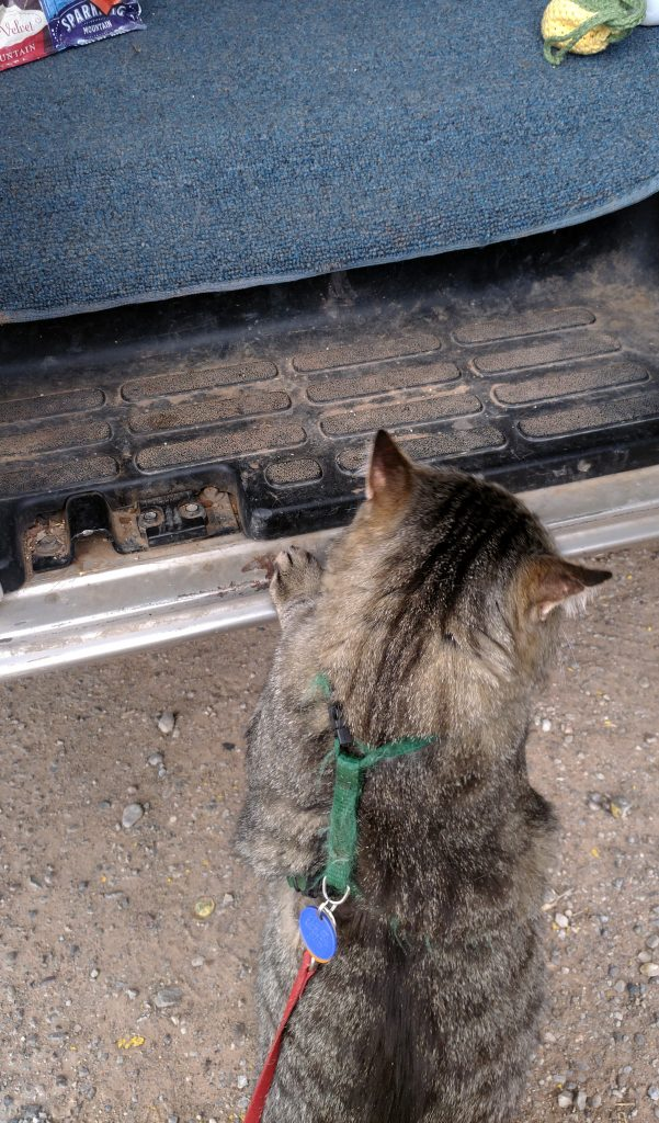 Major Tom is standing on the ground next to the van, but he's got his paws up on the running board. His ears are out to the sides.
