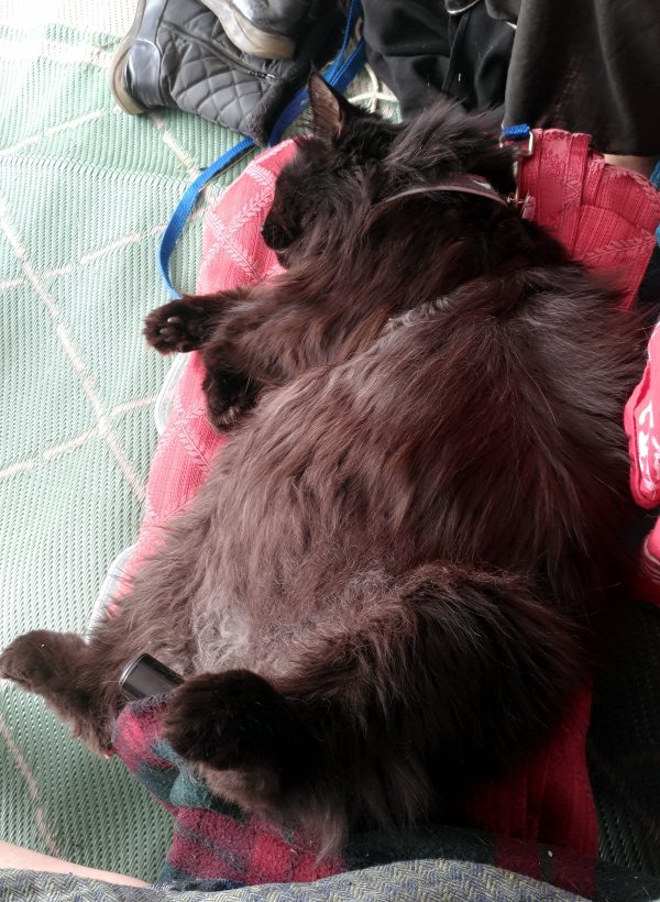 Hades, laying half on his side & half on his back, on a folded-up piece of red fabric. There's a lot of belly involved.