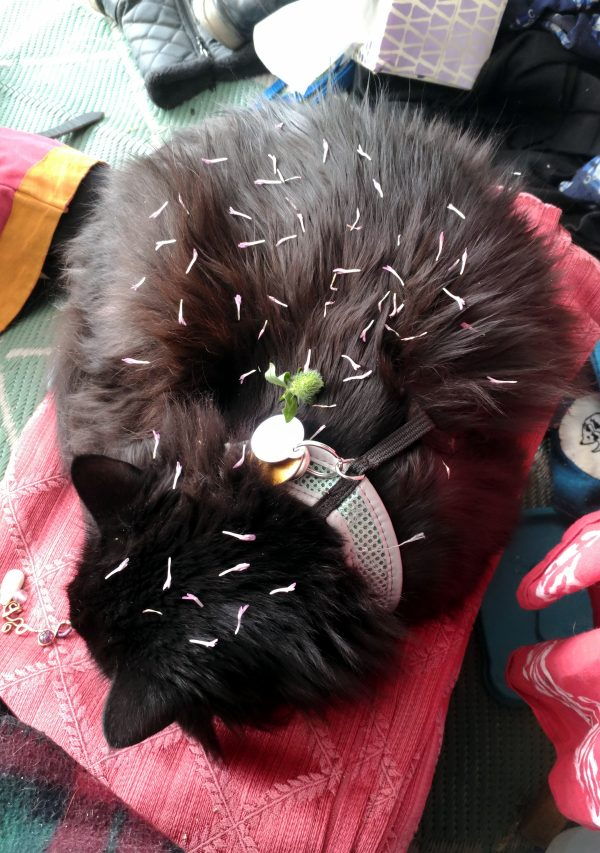 Hades is in the same spot, but this time he's curled up, & also covered in tiny pinkish plant pieces.