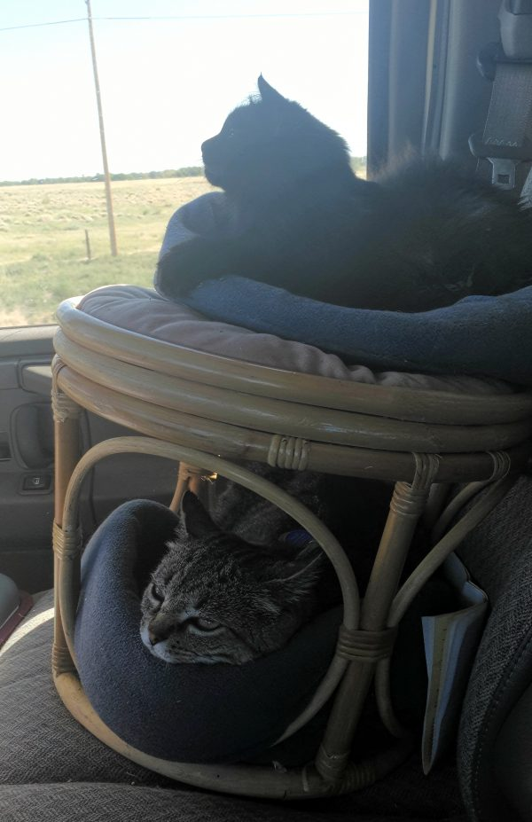 A round wicker footrest sittin on the passenger seat of the van. Hades is curled up in the cat bed on top of it, & Tom is likewise occupying the bed tucked into the base.