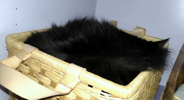 Pretty much Hades is a ball of black fluff stuffed into a rectangular basket. There's that ear, though.