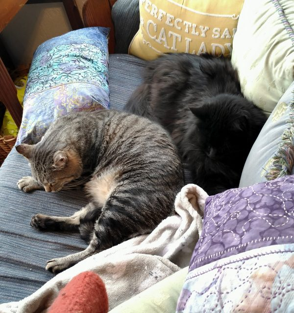 Tom is curled up on the couch, & Hades is meatloafed right behind him. Everyone's ears are calm & in fact I think they're both asleep.