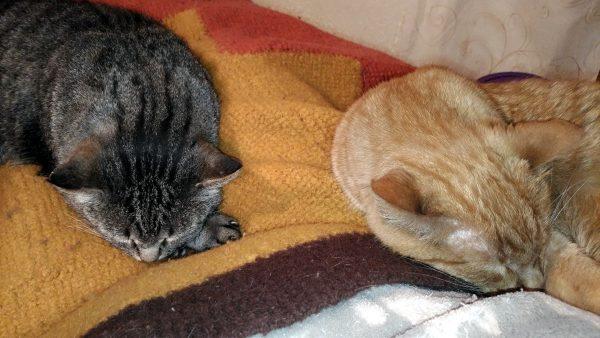 Both boys, curled up, peacefully asleep.