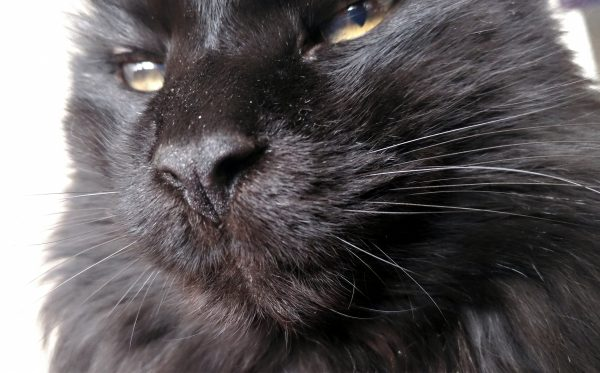 Slightly different angle, focusing on his Roman nose & delightful whiskers.