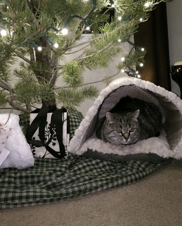 There's a padded cat cave tucked under the tree, & Major Tom is tucked inside it.