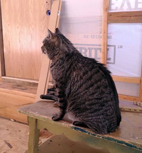 Major Tom, a large grey tabbycat, sits on a coffeetable in the tinker's wagon, determinedly & pointedly facing the other way.