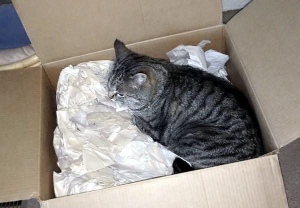 Tom is half-curled, laying in a large cardboard box filled with packing paper.