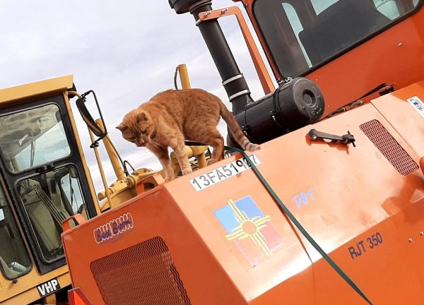 Loiosh, trailing his green leash, stands atop a large orange road-fixing machine, looking downwards.