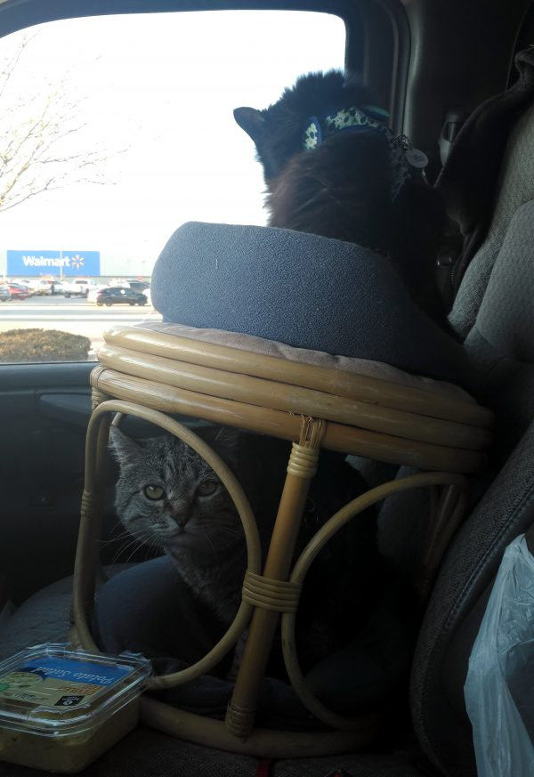 In the passenger seat of the van is a round wicker footstool. Hades is in a cat bed on top of it, facing away & having a wash; Major Tom is in another cat bed tucked into the base, eyeing the camera suspciously.