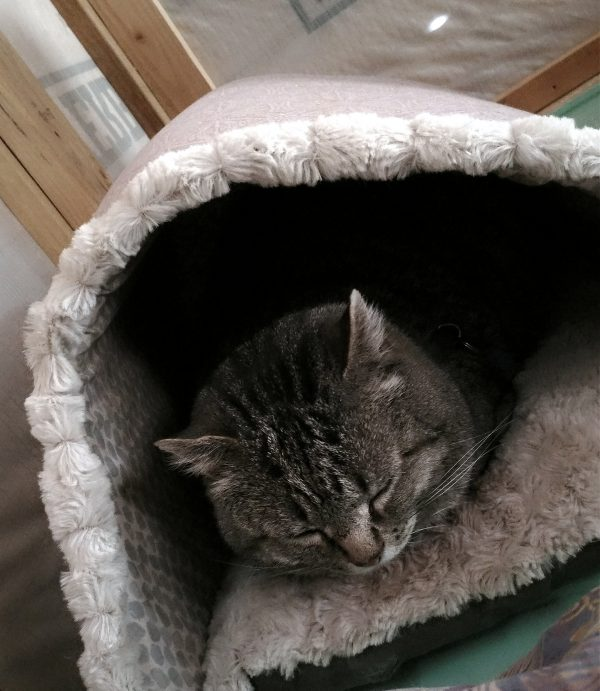 Tom is neatly tucked into his fluffy cat cave, eyes closed. Behind him is the wall of the tinker's wagon.