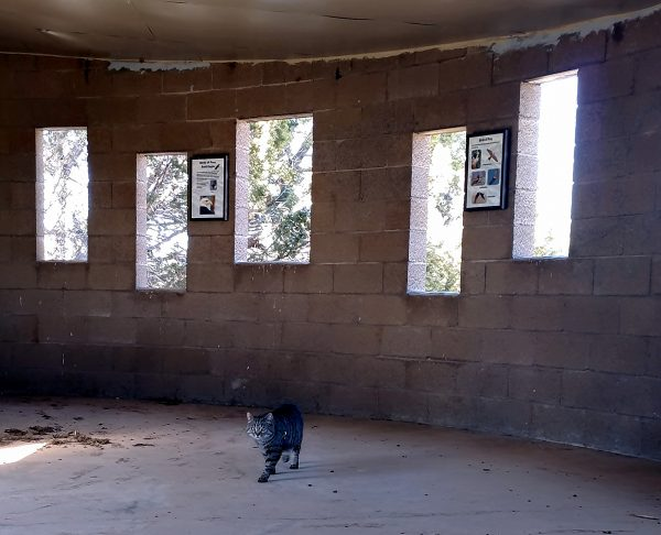 Inside a building constructed of concrete blocks with narrow slot windows looking out over the lake stands Major Tom, looking underwhelmed.