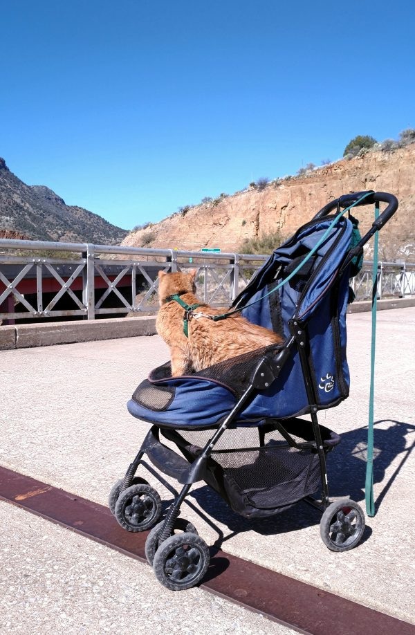 Loiosh sits in his stroller, looking over his shoulder & away from the camera. Have I mentioned the sky was really blue that day?
