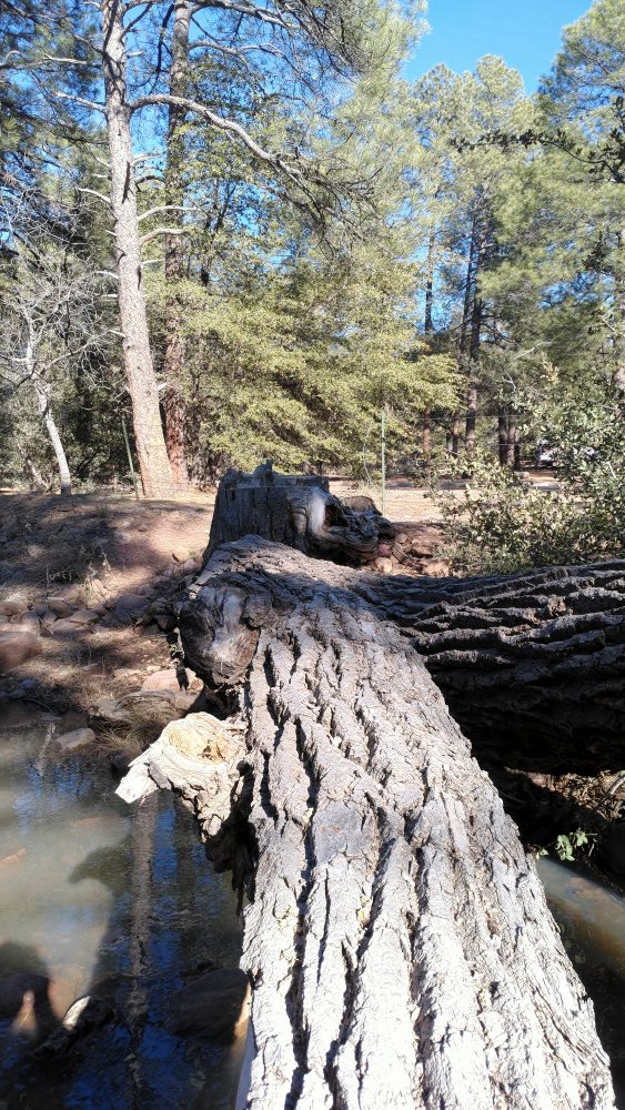 A big tree trunk, probably a foot and a half across, leads over the creek. On the far side is the stump it was cut from.