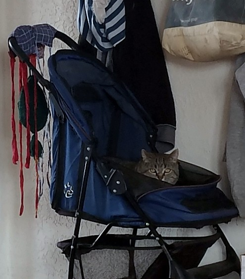 The stroller's up against a wall. The only part of Tom really visible is his head. He is, also, giving me stinkeye.