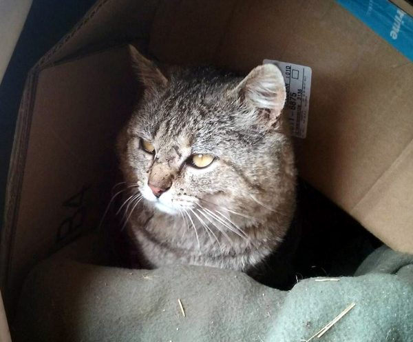He's sitting in a box, with a blanket tucked into it, with more cardboard arched over his head. He's looking off to the left, & the scars at the bridge of his nose are clearly visible.