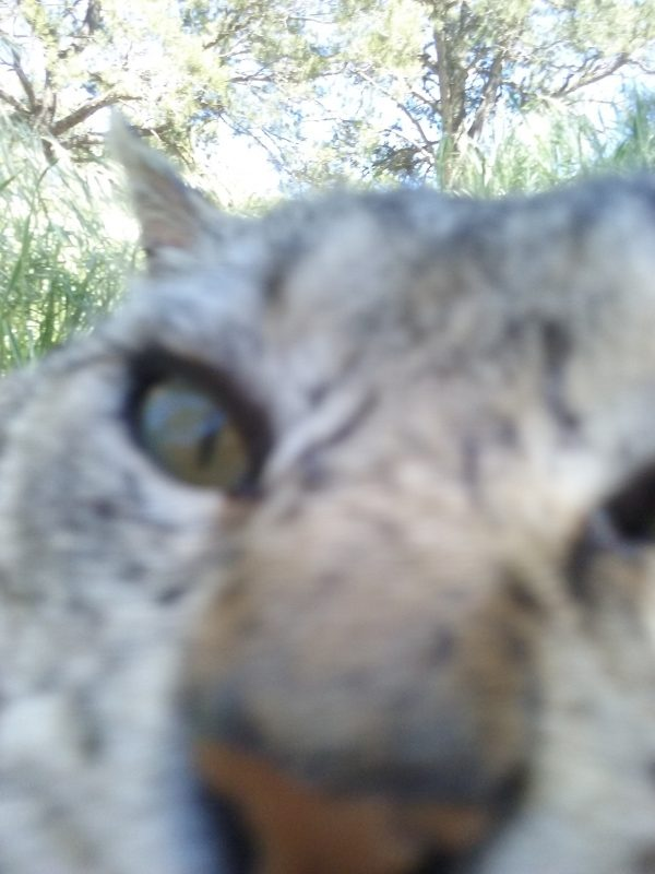 A blurry extreme closeup of Tom's face. His nose is just visible at the bottom, one eye, & above that an ear sticking out at a ridiculous angle.