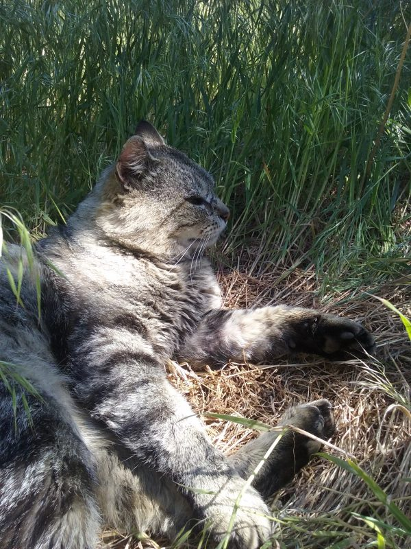 He's made a grass nest in tall green grass. His eyes are half-closed; he's relaxed, & happy.