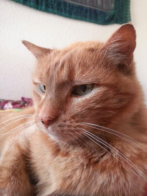 A closeup of his face. He is very handsome & also very cranky.