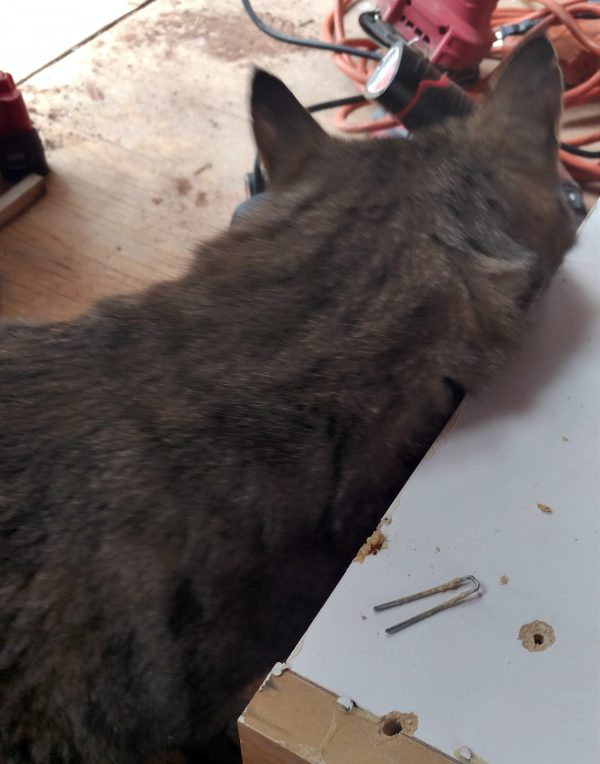 An inch-long staple lays on the back of the cabinet, next to the hole from which it has been wrenched. Tom's rubbing his face all over the side of the cabinet. It's his now.