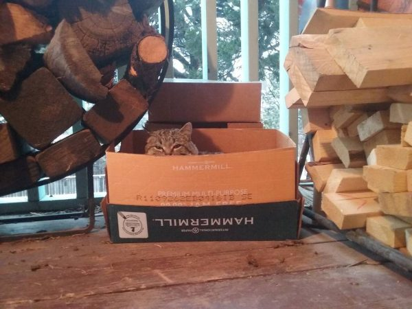 A sturdy cardboard box is tucked between two stacks of firewood on a porch. Major Tom is tucked into the box, just his head peeking over the side.