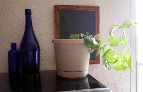 The creeping charlie is in an off-white pot. It's a milt relative, & the leaves look similar. There are two blue glass bottles, one tall & one short, & on the wall hangs a framed piece of slate chalkboard framed in wood.