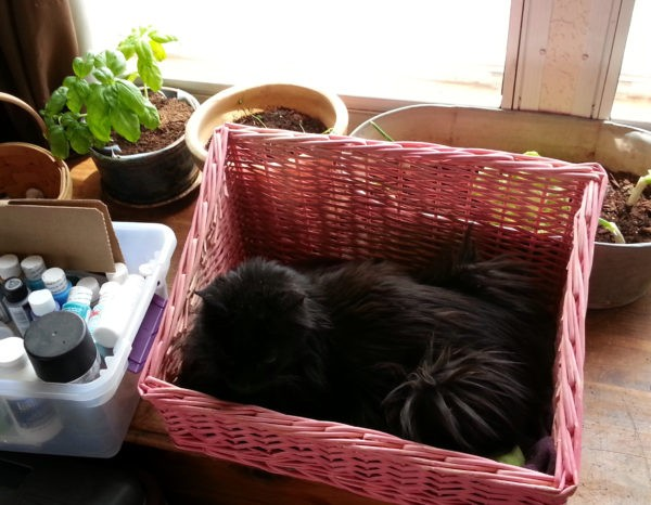 A rectangular pink basket sits in front of all the plants. It's the perfect size to hold a cat, & that's what it's doing; Hades is meatloafed in it, gazing speculatively off into the distance.