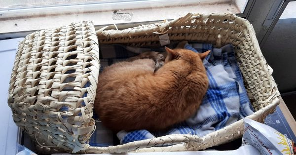 A classic woven baby basket sits just inside a window. It's got a couple of blue plaid blankets in it, & is, also, infested with an orange cat.