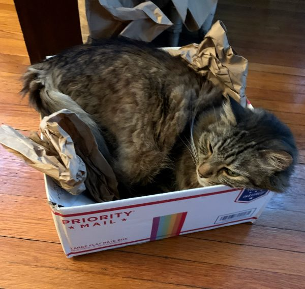 A large fluffy grey tabby, kind of a longhaired version of Major Tom, who has stuffed his entire self into a USPS medium top-opening flat rate box. He looks pretty pleased about it all.