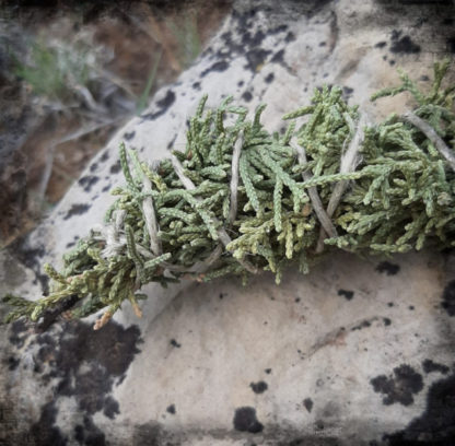 juniper 1