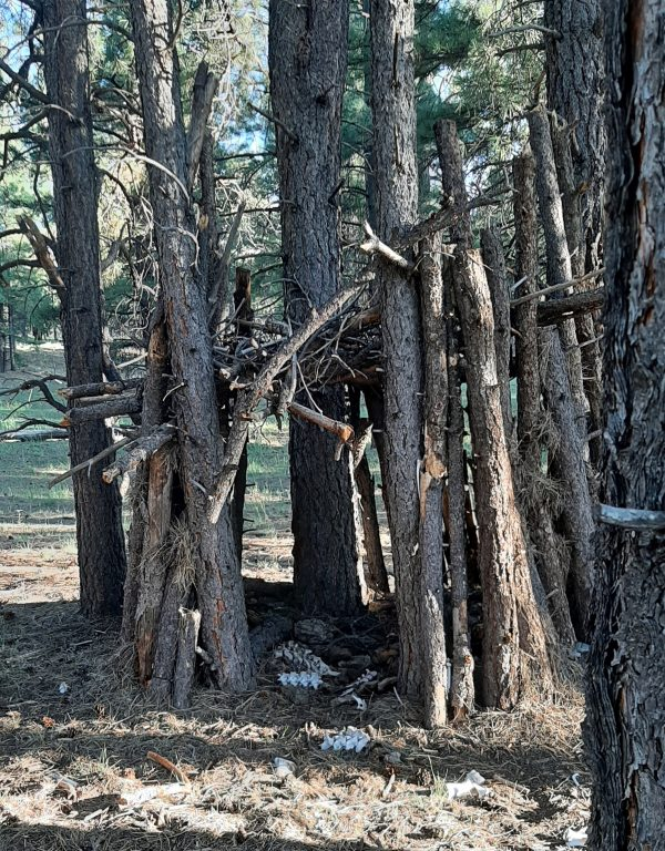A tumbledown structure built from logs with the bark still on, braced against several still-standing trees. Old, white vertebrae are visible on the ground inside.