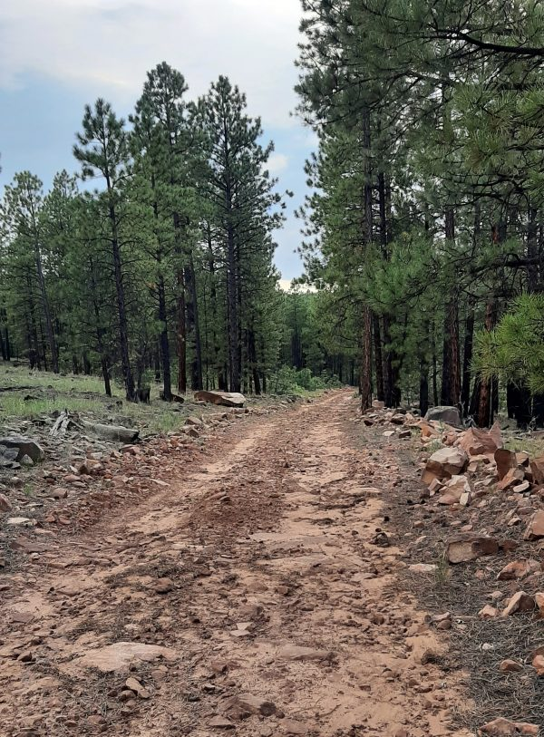 A rutted, rough dirt track, lined with rocks ranging in size from 'large' to 'really large', winds through tall ponderosa pines.