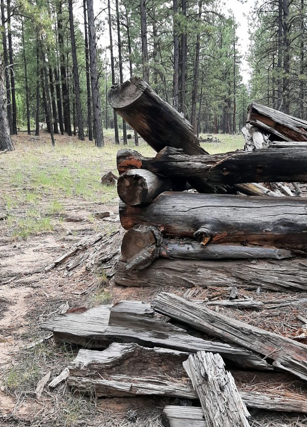 The corner of the cabin -- built in classic log cabin style, with treetrunks at least a foot wide stacked atop each other.