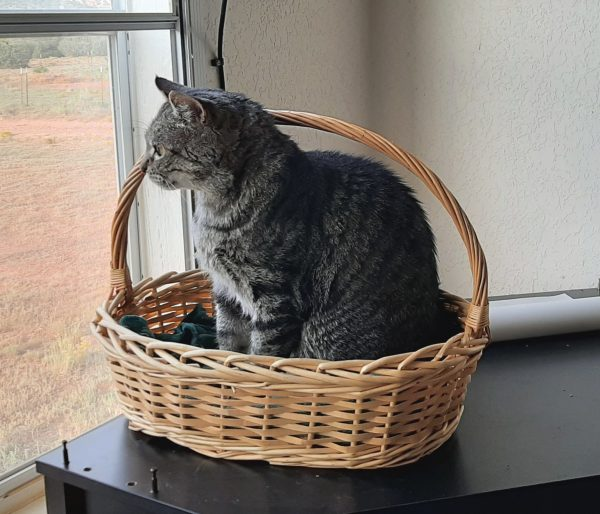 Major Tom, a large grey tabby, is sitting in an oval basket that looks like it would just barely fit him if he were to lay down in it. He's gazing out the window.