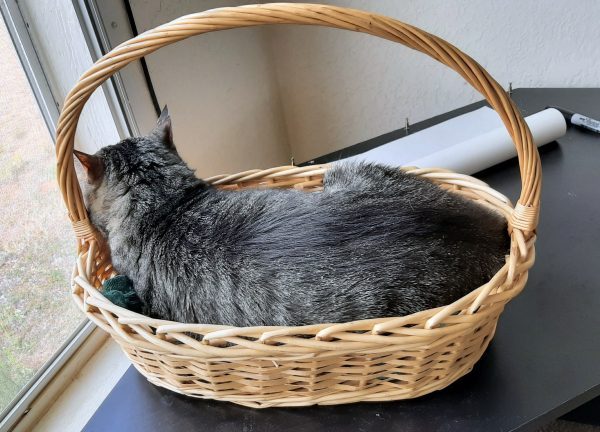 Tom's laying in the basket. He fits in it pretty neatly.