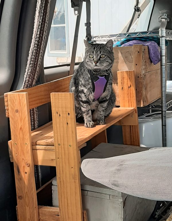Major Tom, a big grey tabby wearing a purple harness, is sitting on a set of wooden shelves in the van, looking apprehensively out the windshield.
